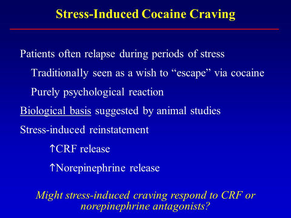 Stress-Induced Cocaine Craving Patients often relapse during periods of stress Traditionally seen as a wish to escape via cocaine Purely psychological reaction Biological basis suggested by animal studies Stress-induced reinstatement CRF release Norepinephrine release Might stress-induced craving respond to CRF or norepinephrine antagonists
