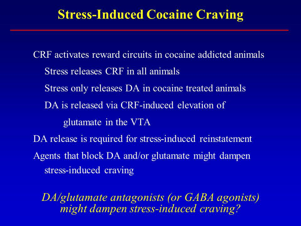 Stress-Induced Cocaine Craving CRF activates reward circuits in cocaine addicted animals Stress releases CRF in all animals Stress only releases DA in
