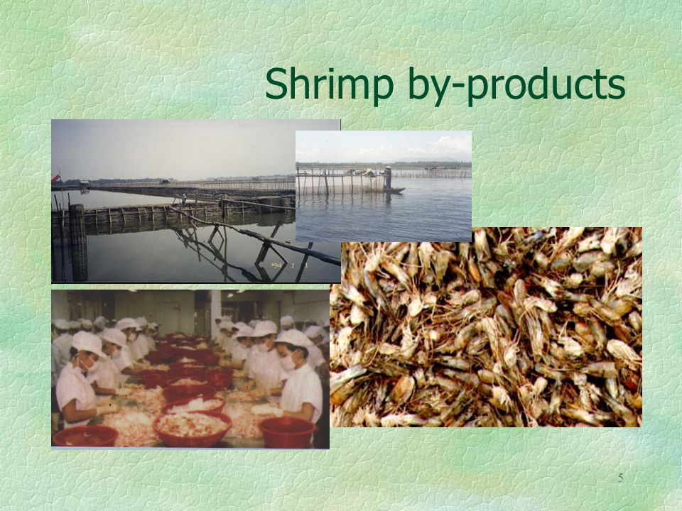 5 Shrimp by-products