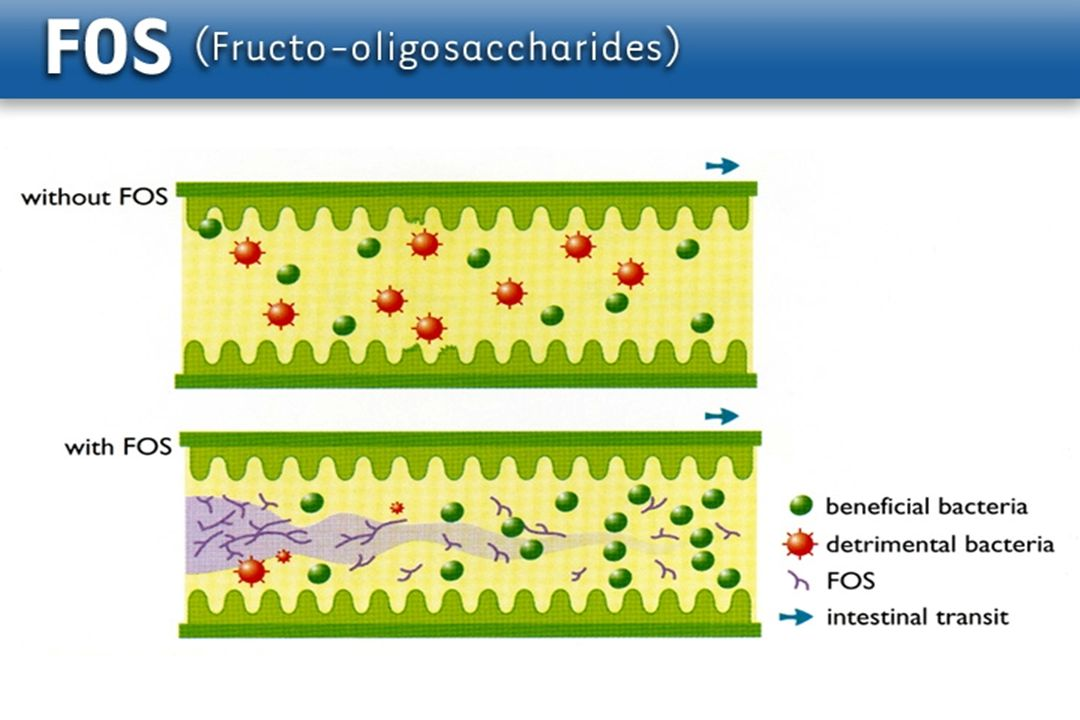 Fiber – – VFA nutritive to mucosa – –Normalizes motility (insoluble) – –Acidifies contents change flora Fiber Enhanced