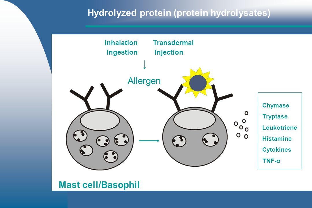Hydrolyzed protein (protein hydrolysates) No cross linkage No degranulation