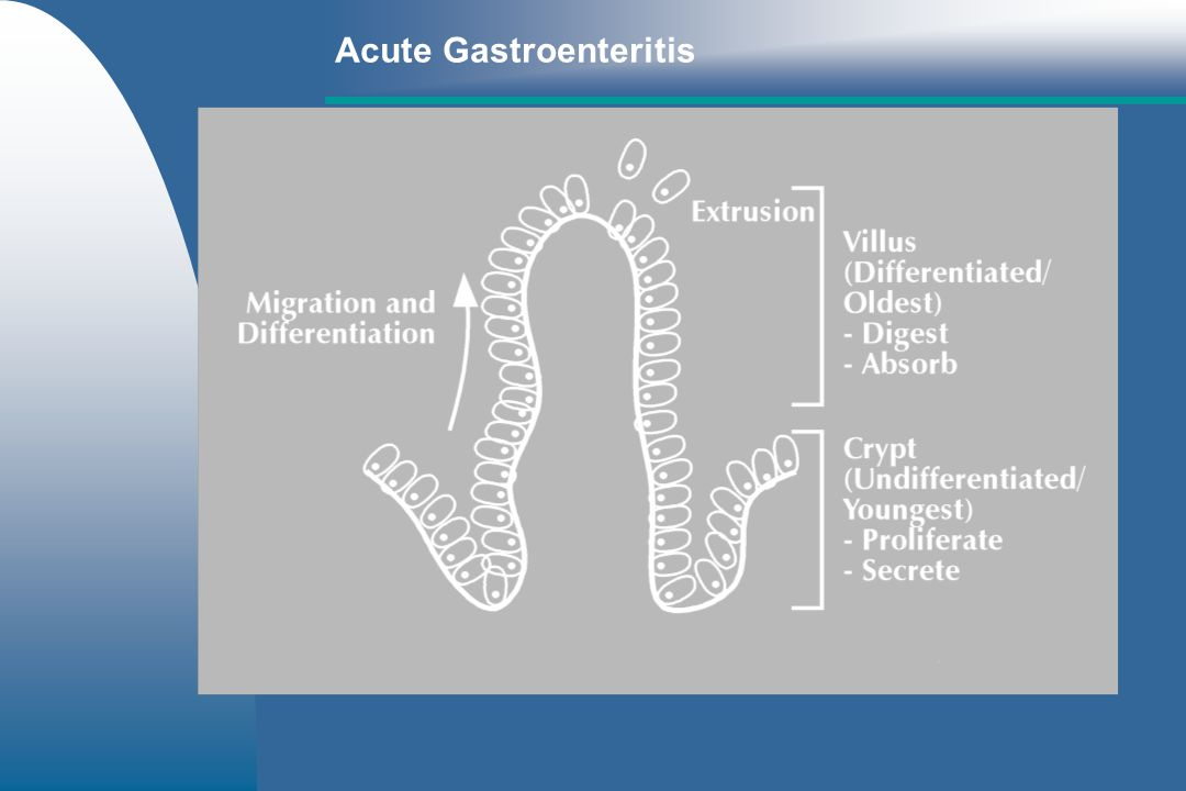 Dietary management – –Small frequent meals (3-6 xs/day) – –Gradually increase amount (3 days) – –Highly digestible diet Acute Gastroenteritis