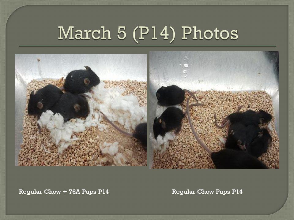 Regular Chow Pups P14Regular Chow + 76A Pups P14
