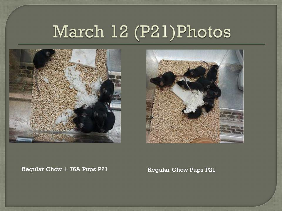 Regular Chow Pups P21 Regular Chow + 76A Pups P21