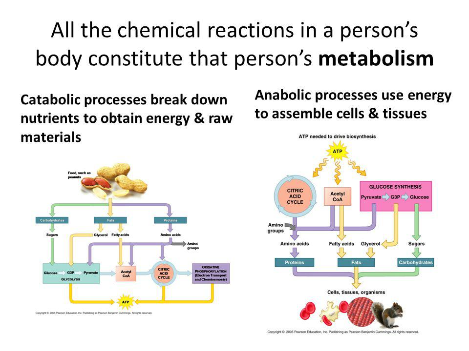 All the chemical reactions in a persons body constitute that persons metabolism Catabolic processes break down nutrients to obtain energy & raw materials Anabolic processes use energy to assemble cells & tissues