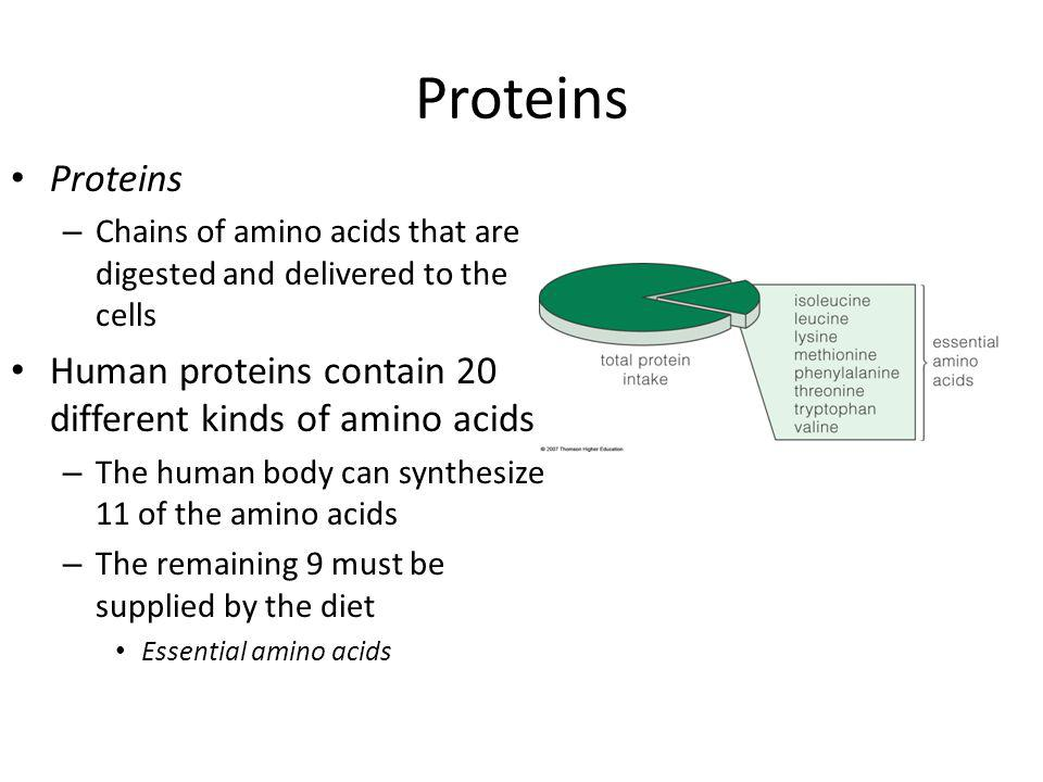 Proteins – Chains of amino acids that are digested and delivered to the cells Human proteins contain 20 different kinds of amino acids – The human body can synthesize 11 of the amino acids – The remaining 9 must be supplied by the diet Essential amino acids