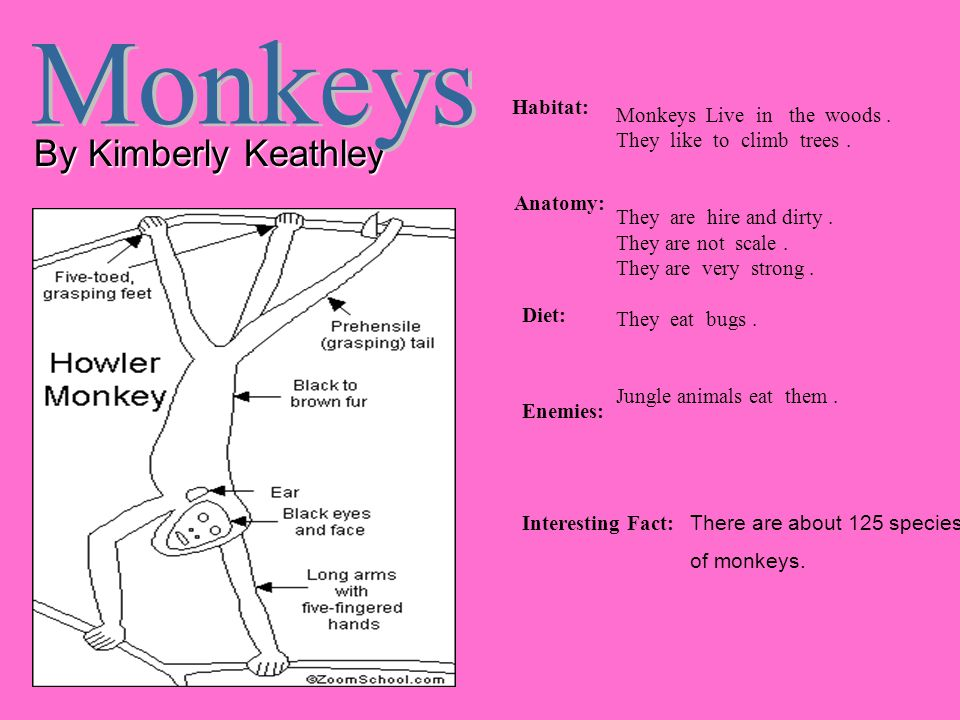 By Kimberly Keathley Habitat: Anatomy: Diet: Enemies: Interesting Fact: Monkeys Live in the woods. They like to climb trees. They are hire and dirty.