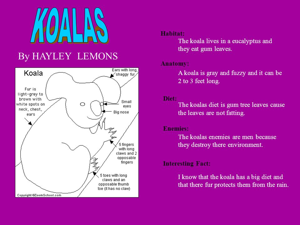 By HAYLEY LEMONS Habitat: Anatomy: Diet: Enemies: Interesting Fact: The koala lives in a eucalyptus and they eat gum leaves. A koala is gray and fuzzy