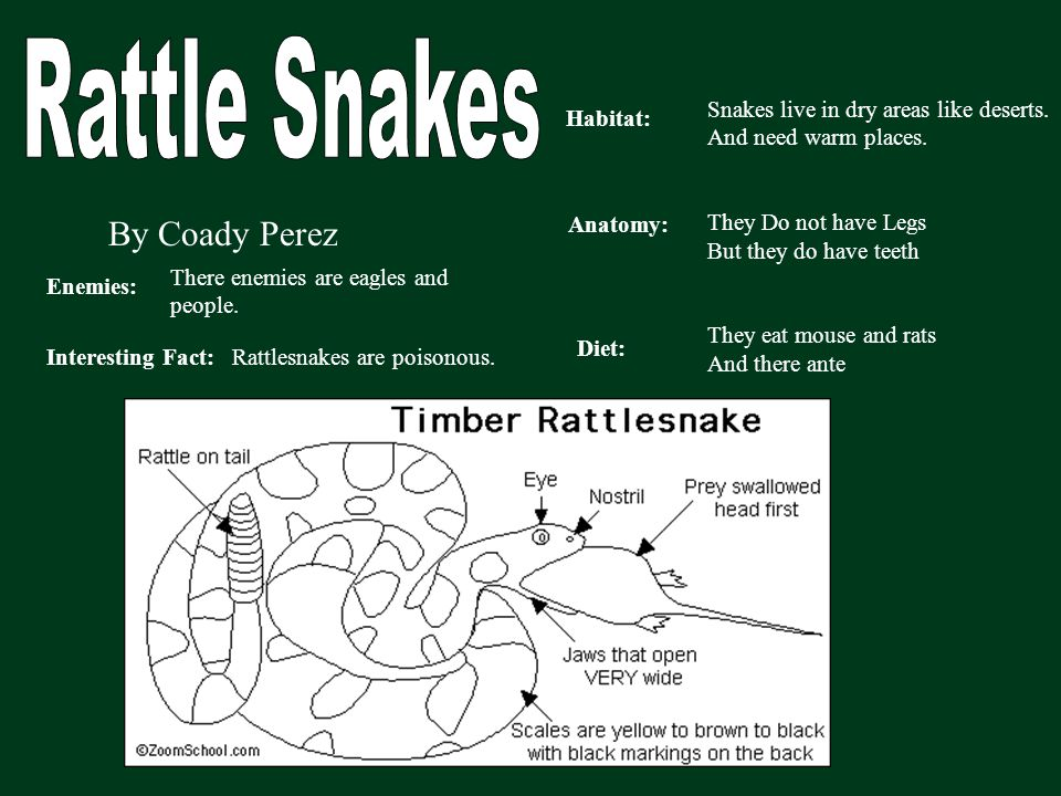By Coady Perez Habitat: Anatomy: Diet: Enemies: Interesting Fact: Snakes live in dry areas like deserts. And need warm places. They Do not have Legs B