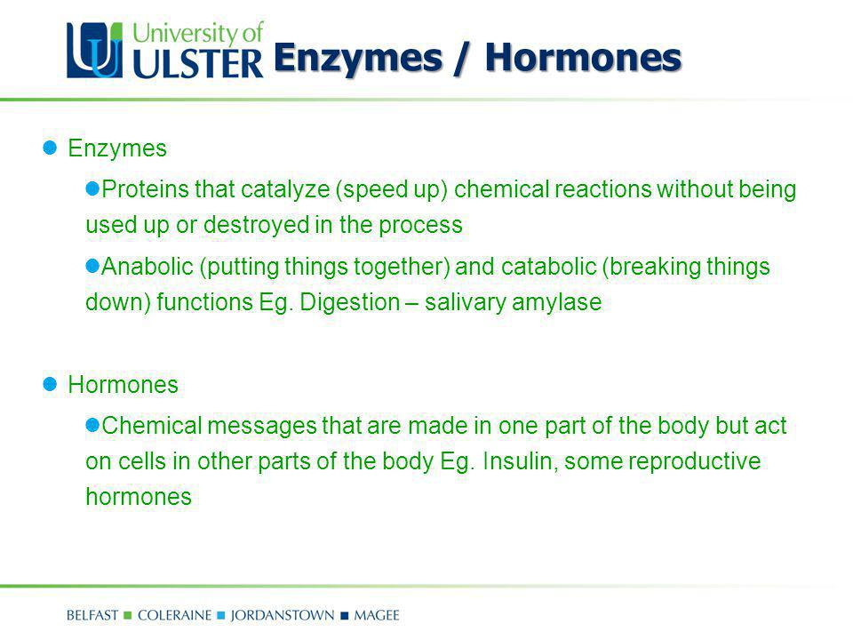 Enzymes / Hormones Enzymes Proteins that catalyze (speed up) chemical reactions without being used up or destroyed in the process Anabolic (putting th