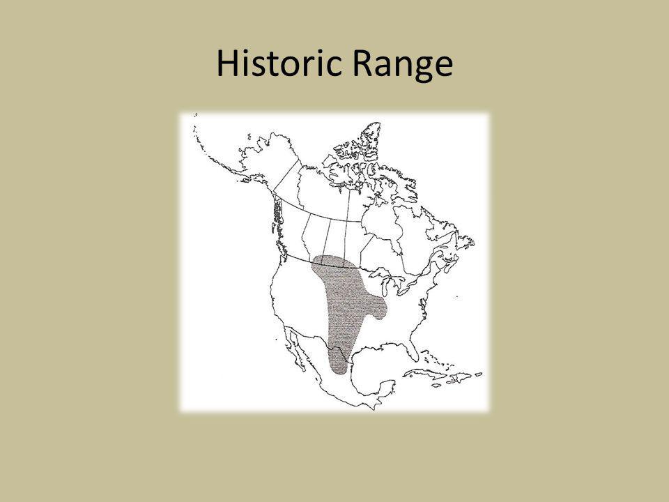 Historic Range