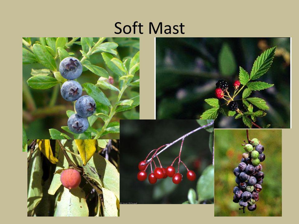 Soft Mast