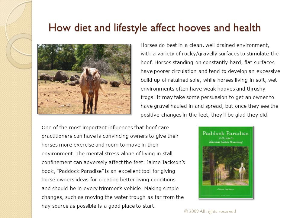 How diet and lifestyle affect hooves and health Horses do best in a clean, well drained environment, with a variety of rocky/gravelly surfaces to stim