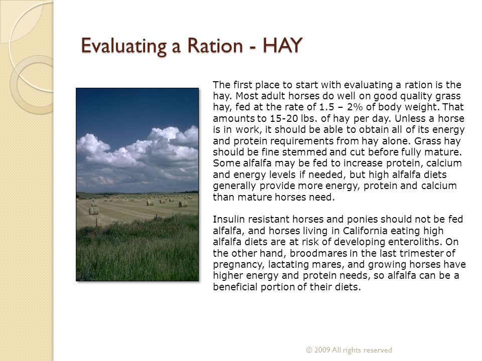 The first place to start with evaluating a ration is the hay. Most adult horses do well on good quality grass hay, fed at the rate of 1.5 – 2% of body