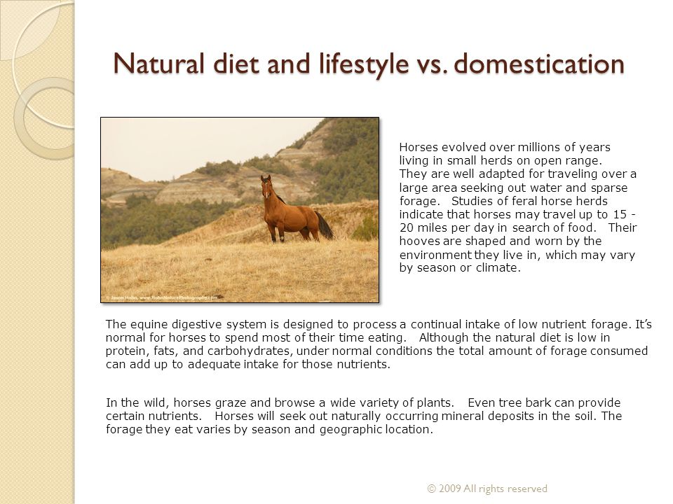 Natural diet and lifestyle vs. domestication The equine digestive system is designed to process a continual intake of low nutrient forage. Its normal