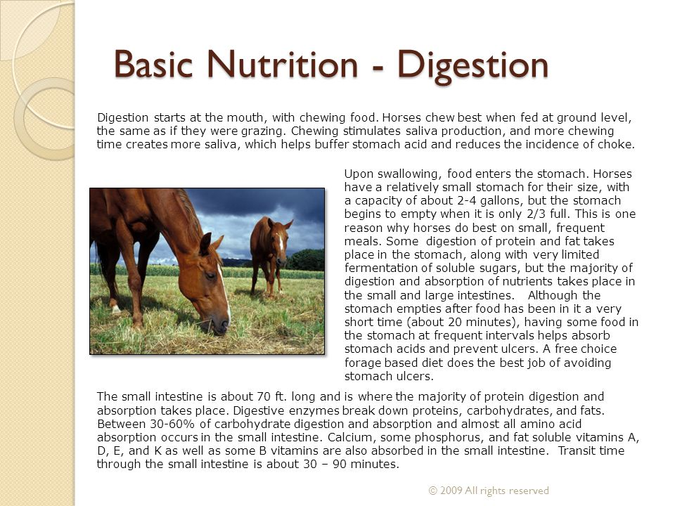 Digestion Food leaves the small intestine and enters the cecum.