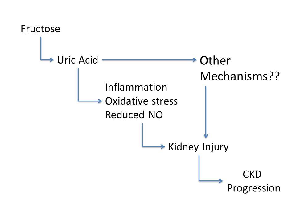 Fructose Uric Acid Inflammation Oxidative stress Reduced NO Kidney Injury CKD Progression Other Mechanisms??