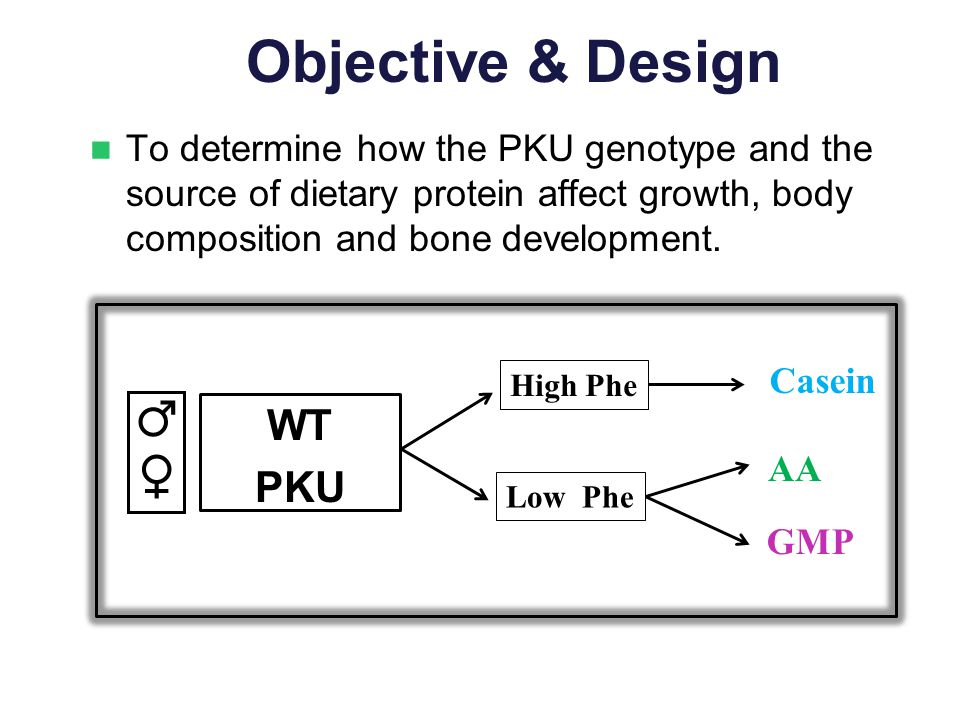 Objective & Design To determine how the PKU genotype and the source of dietary protein affect growth, body composition and bone development. WT PKU AA