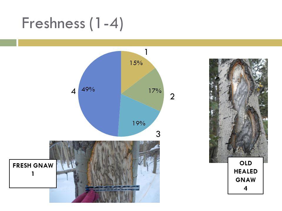 Freshness (1-4) FRESH GNAW 1 OLD HEALED GNAW 4