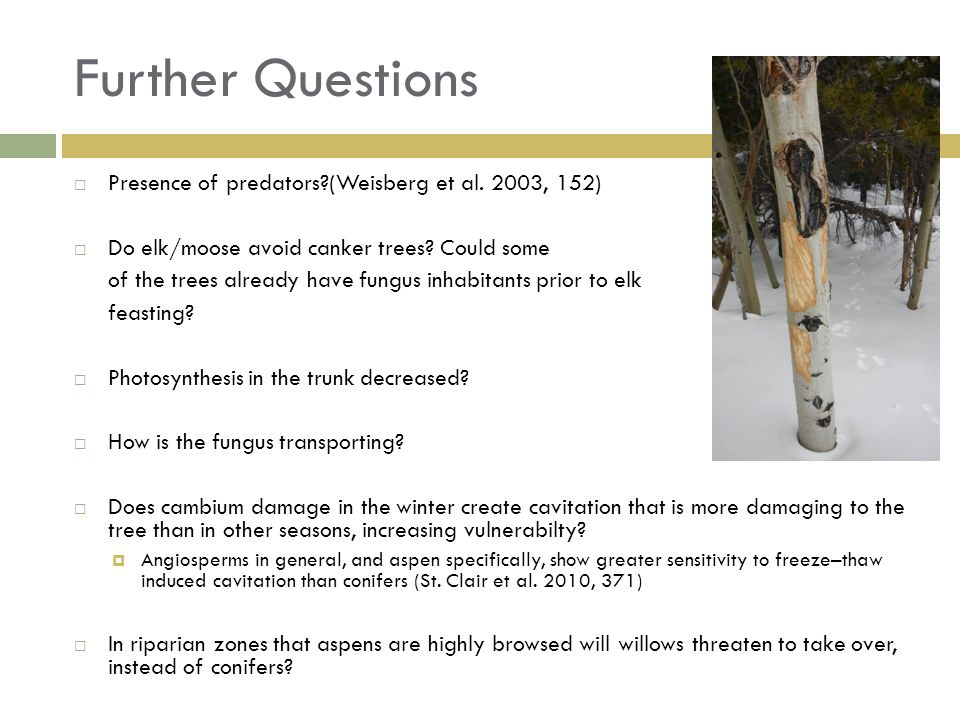 Further Questions Presence of predators (Weisberg et al.