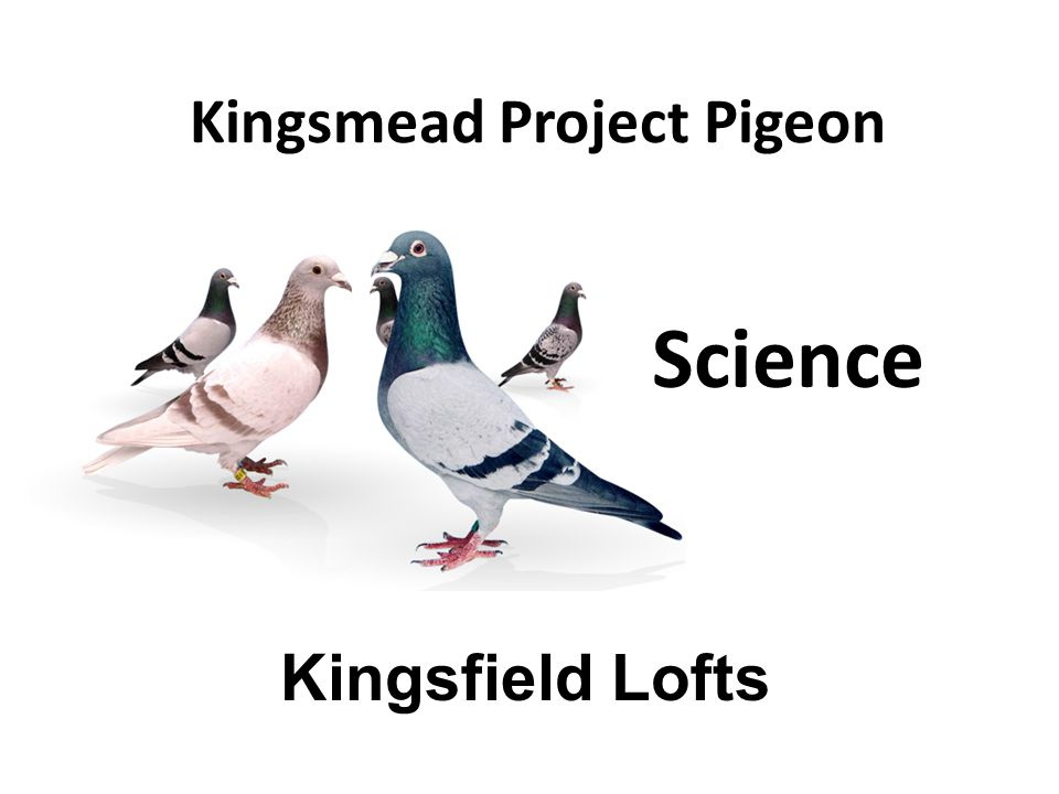 Kingsmead Project Pigeon Kingsfield Lofts Science