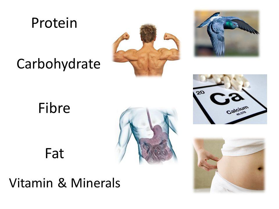 Protein Carbohydrate Fat Fibre Vitamin & Minerals