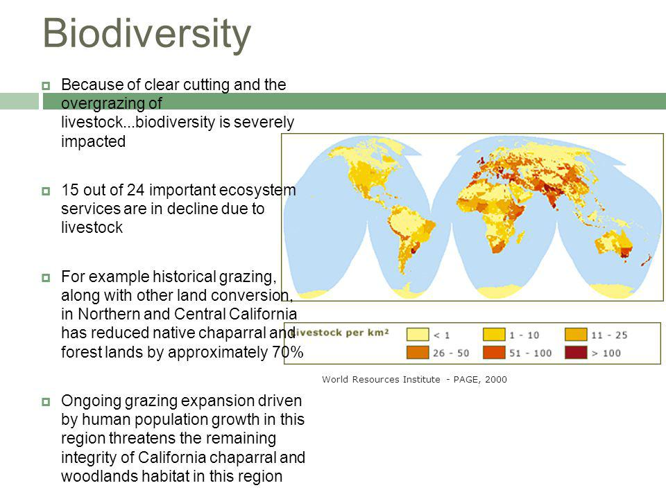 Biodiversity Because of clear cutting and the overgrazing of livestock...biodiversity is severely impacted 15 out of 24 important ecosystem services are in decline due to livestock For example historical grazing, along with other land conversion, in Northern and Central California has reduced native chaparral and forest lands by approximately 70% Ongoing grazing expansion driven by human population growth in this region threatens the remaining integrity of California chaparral and woodlands habitat in this region World Resources Institute - PAGE, 2000