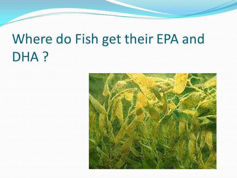 Where do Fish get their EPA and DHA