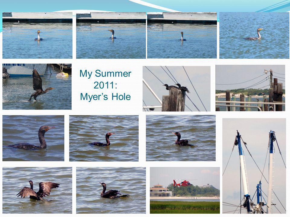 My Summer 2011: Myers Hole