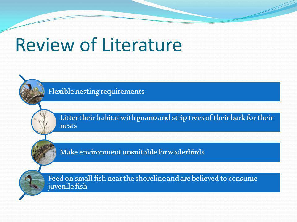 Review of Literature Flexible nesting requirements Litter their habitat with guano and strip trees of their bark for their nests Make environment unsu