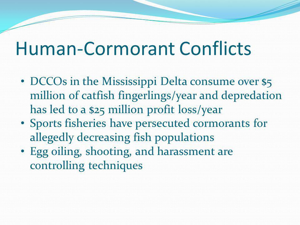 DCCOs in the Mississippi Delta consume over $5 million of catfish fingerlings/year and depredation has led to a $25 million profit loss/year Sports fi