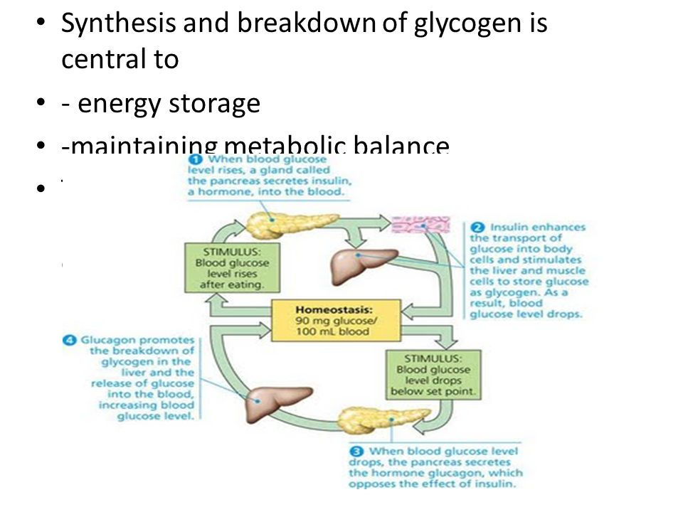 Synthesis and breakdown of glycogen is central to - energy storage -maintaining metabolic balance Tissues in the body rely on ATP generation by oxidat