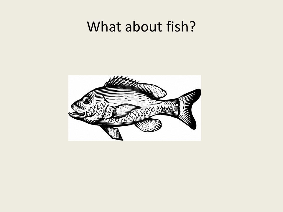What about fish?