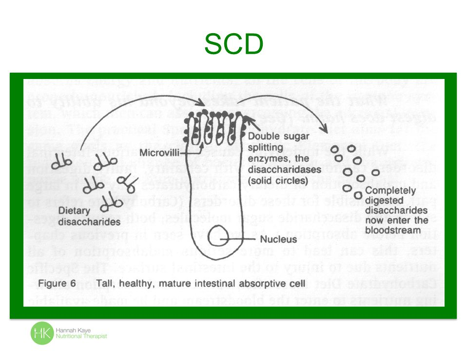 SCD and Probiotics Only Lactobacillus and Sacc Boulardii allowed.