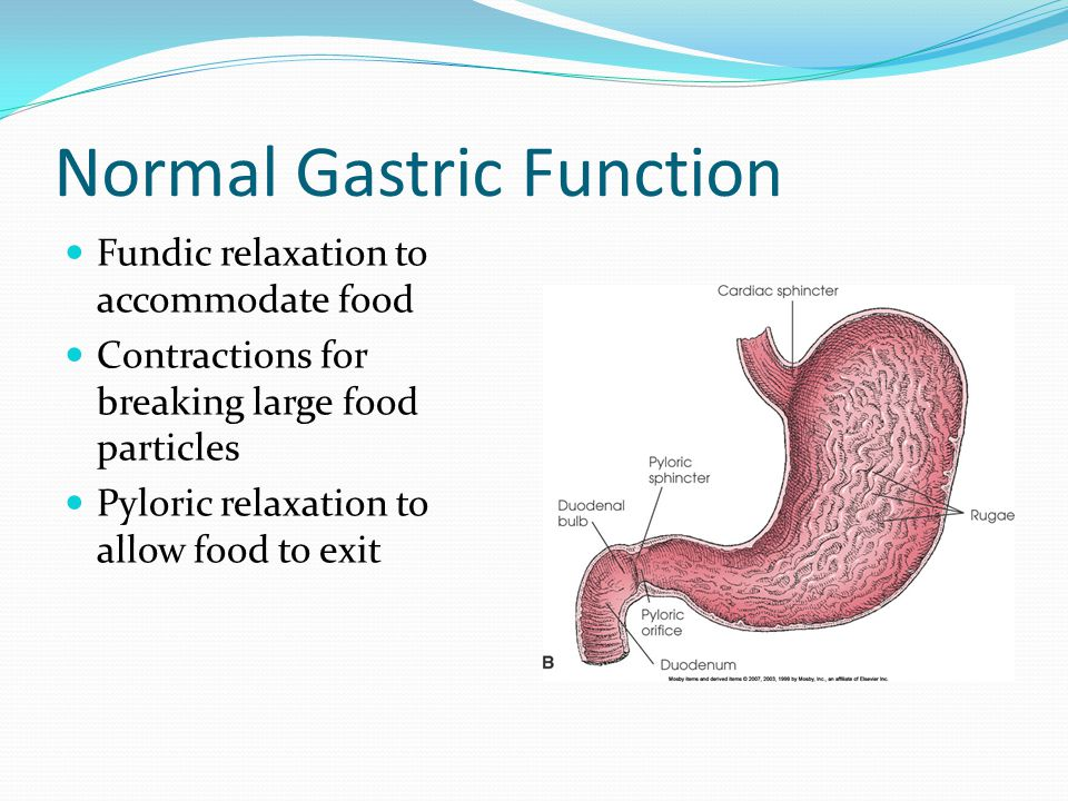 Normal Gastric Emptying Coordinated effort between different regions of the stomach and the duodenum Extrinsic modulation by CNS and distal gut factors Pacemaker located on upper, outer portion of stomach.