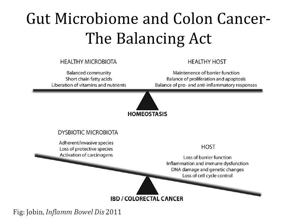 Gut Microbiome and Colon Cancer- The Balancing Act Fig: Jobin, Inflamm Bowel Dis 2011