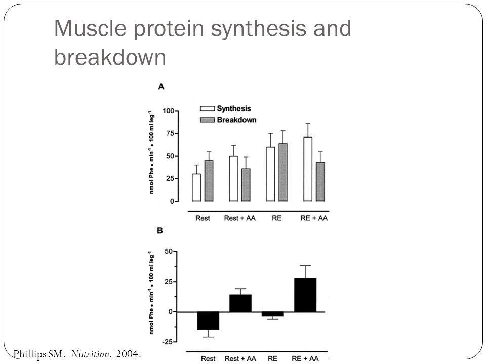 Muscle protein synthesis and breakdown Phillips SM. Nutrition. 2004.