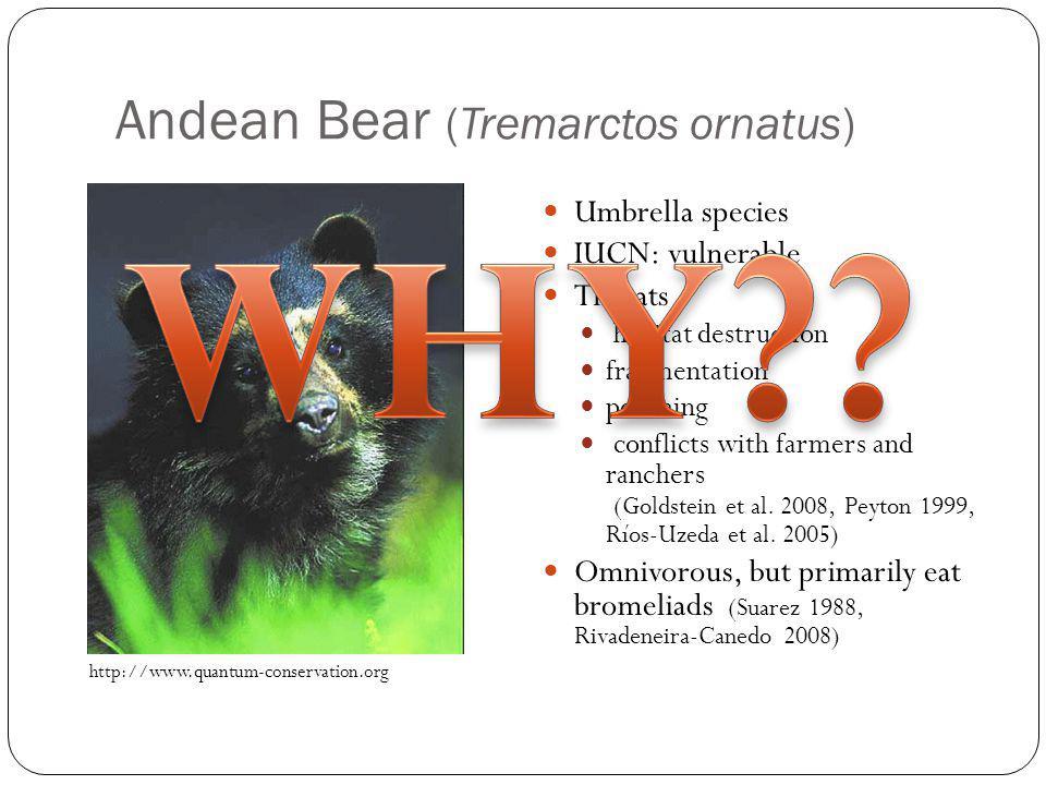 Andean Bear (Tremarctos ornatus) Umbrella species IUCN: vulnerable Threats habitat destruction fragmentation poaching conflicts with farmers and ranch