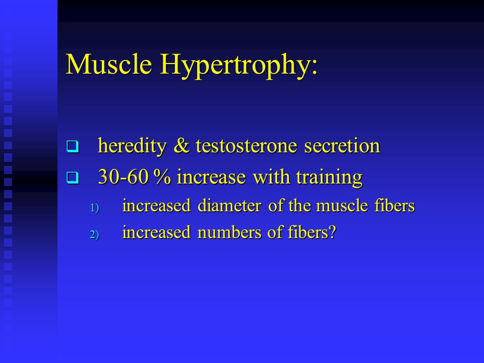 Muscle Hypertrophy: heredity & testosterone secretion heredity & testosterone secretion 30-60 % increase with training 30-60 % increase with training