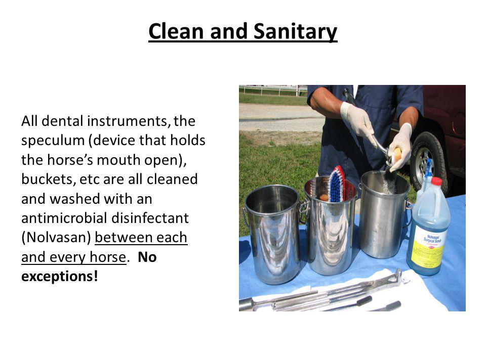 Clean and Sanitary All dental instruments, the speculum (device that holds the horses mouth open), buckets, etc are all cleaned and washed with an ant