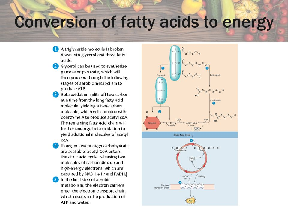 Conversion of fatty acids to energy