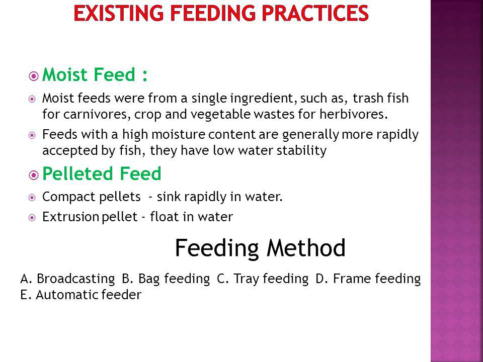 Moist Feed : Moist feeds were from a single ingredient, such as, trash fish for carnivores, crop and vegetable wastes for herbivores.