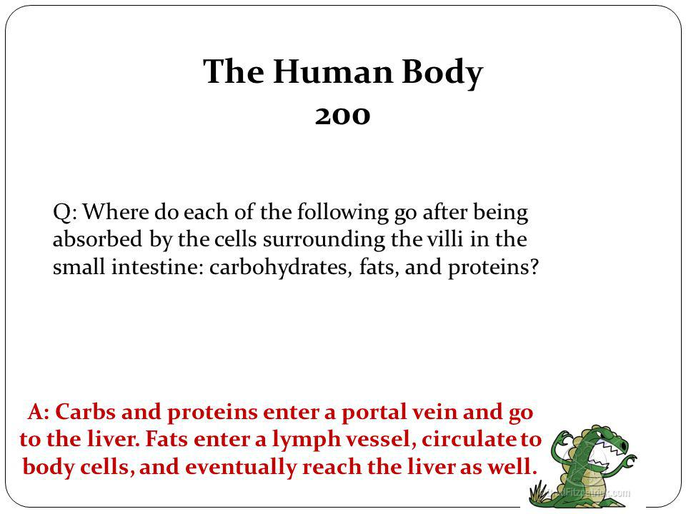 The Human Body 100 Q: Name the organs that food travels through in the digestive system in order, starting with the mouth.