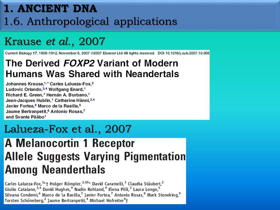 1. ANCIENT DNA 1.6. Anthropological applications Krause et al., 2007 Lalueza-Fox et al., 2007