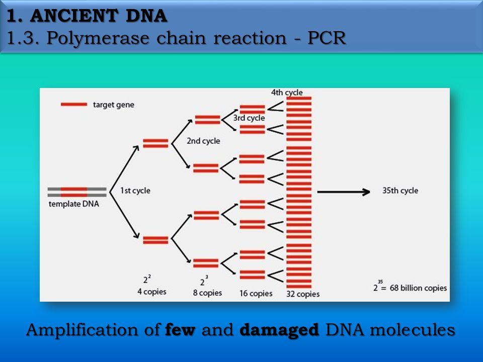1.ANCIENT DNA 1.4.