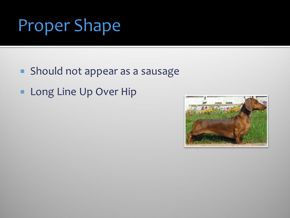 Should not appear as a sausage Long Line Up Over Hip Figure 8 when looking down