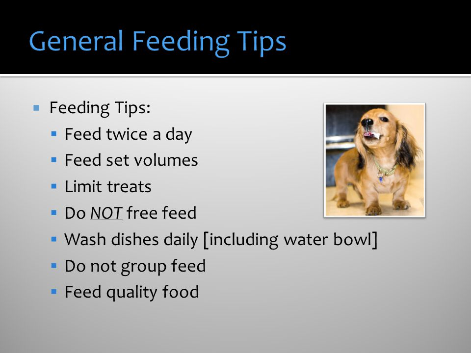Feeding Tips: Feed twice a day Feed set volumes Limit treats Do NOT free feed Wash dishes daily [including water bowl] Do not group feed Feed quality