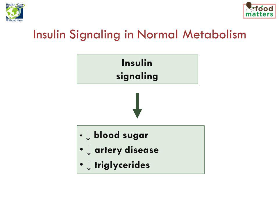 Insulin Signaling in Normal Metabolism Insulin signaling blood sugar artery disease triglycerides