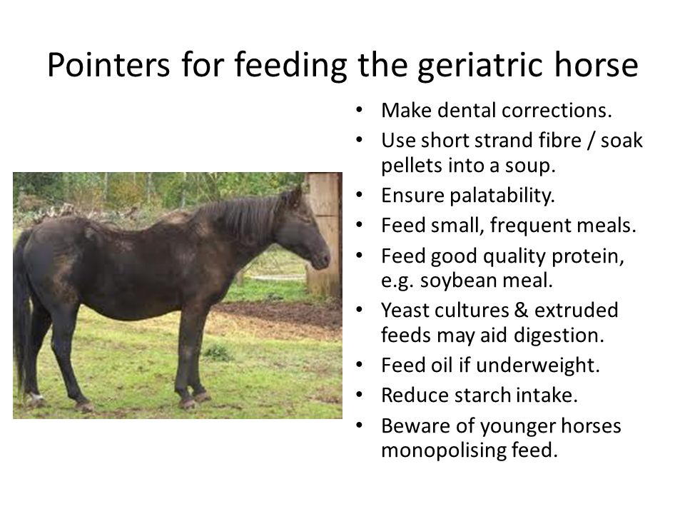 Pointers for feeding the geriatric horse Make dental corrections.
