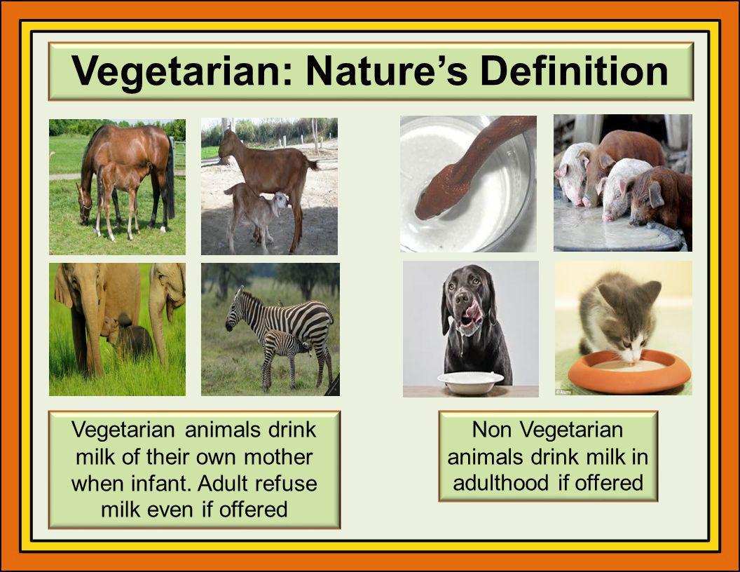 Vegetarian: Natures Definition Vegetarian animals drink milk of their own mother when infant.